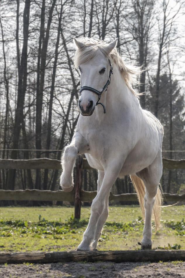 Mein eigenes Pferd 'Gitana'