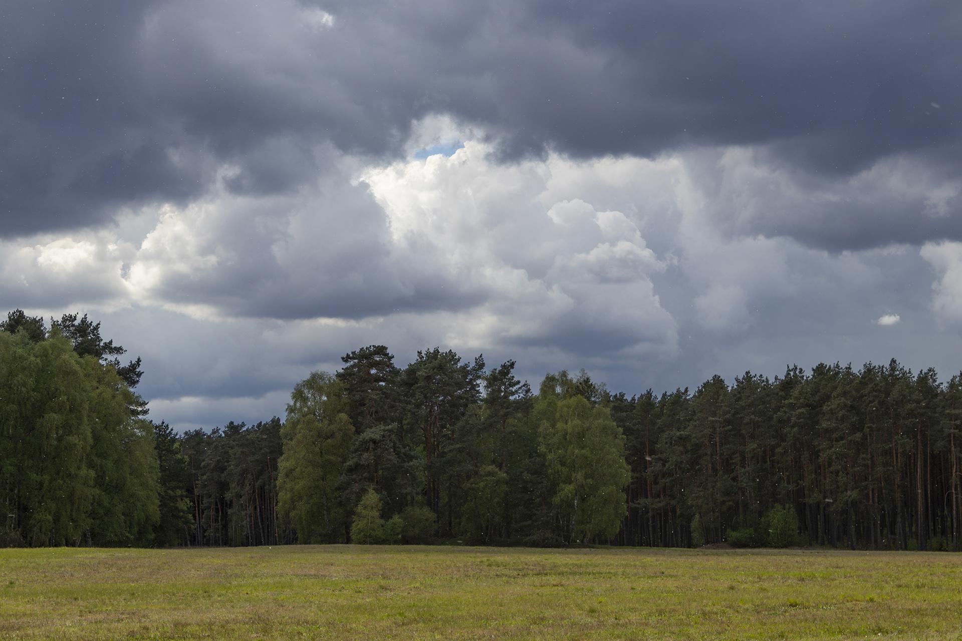 Regen übern Wald